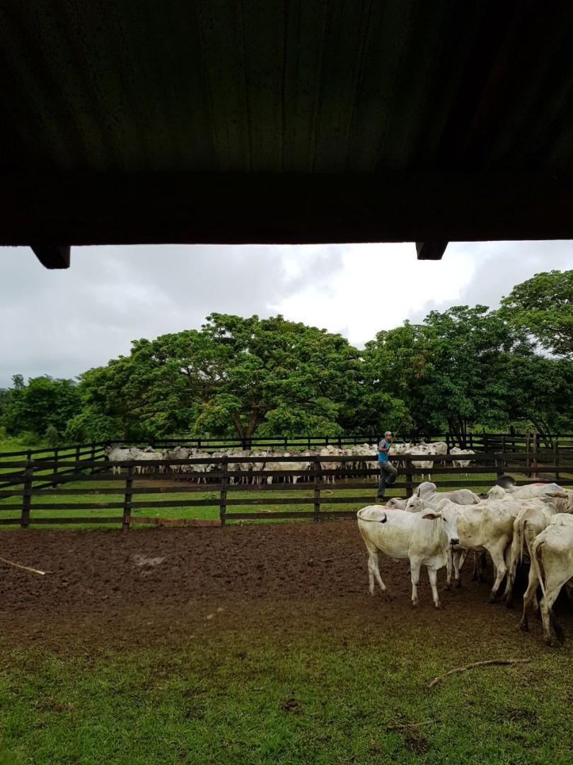Quinta propiedad agrícola en Venta En Venta #propiedad #ganadera zona #terebinto Foto 3