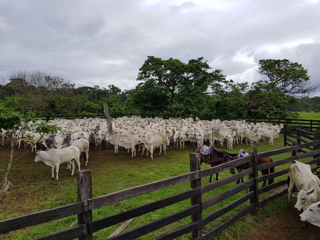 Quinta propiedad agrícola en Venta En Venta #propiedad #ganadera zona #terebinto Foto 5
