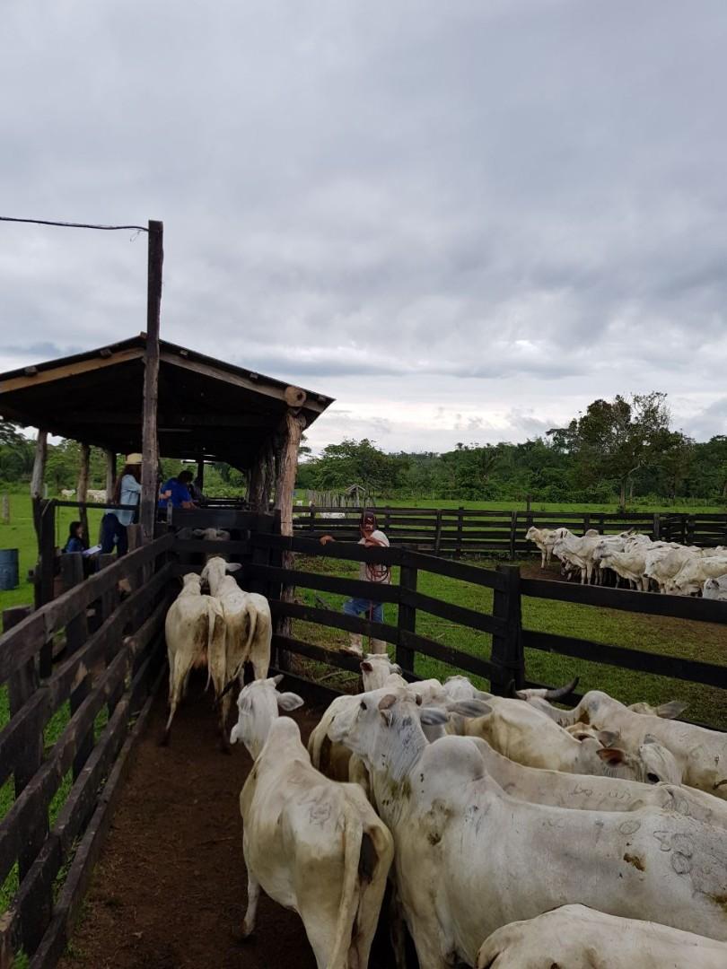 Quinta propiedad agrícola en Venta En Venta #propiedad #ganadera zona #terebinto Foto 2